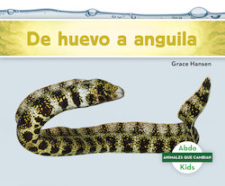 De huevo a anguila (Becoming an Eel)
